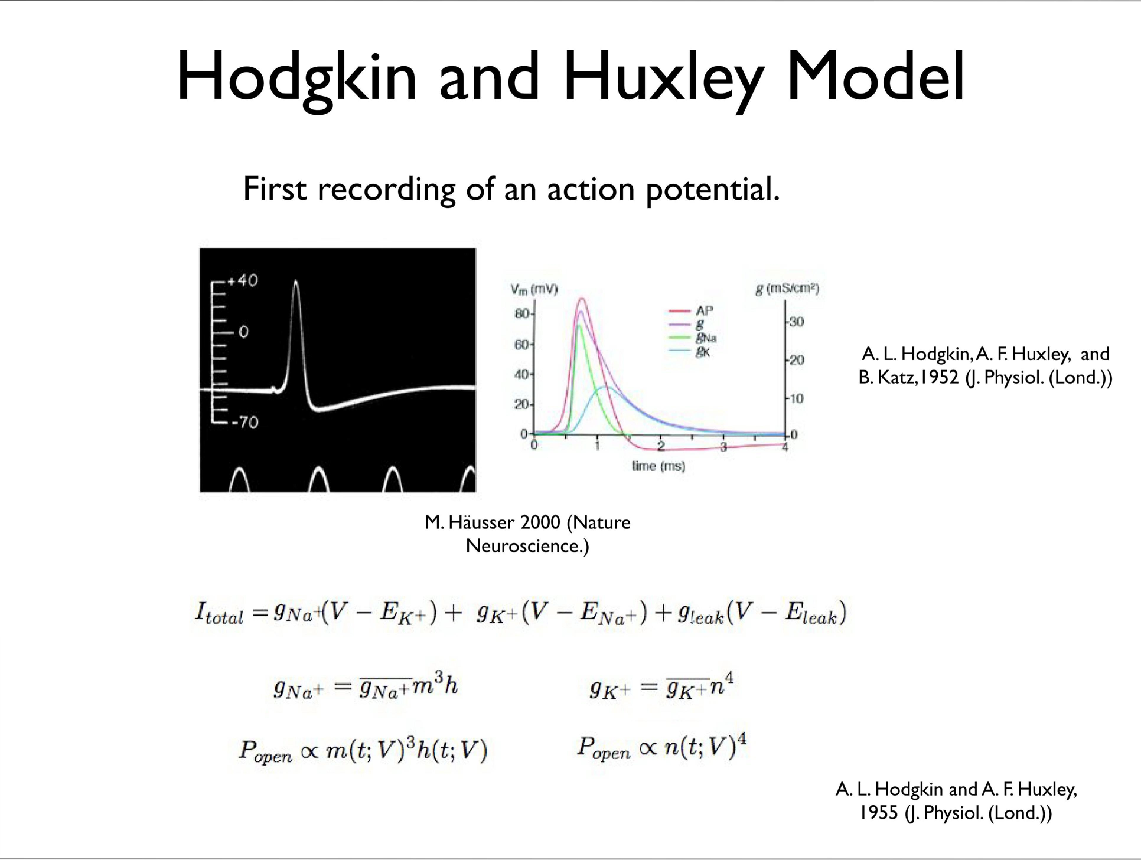 Slide 2: Hodgkin and Huxley Model