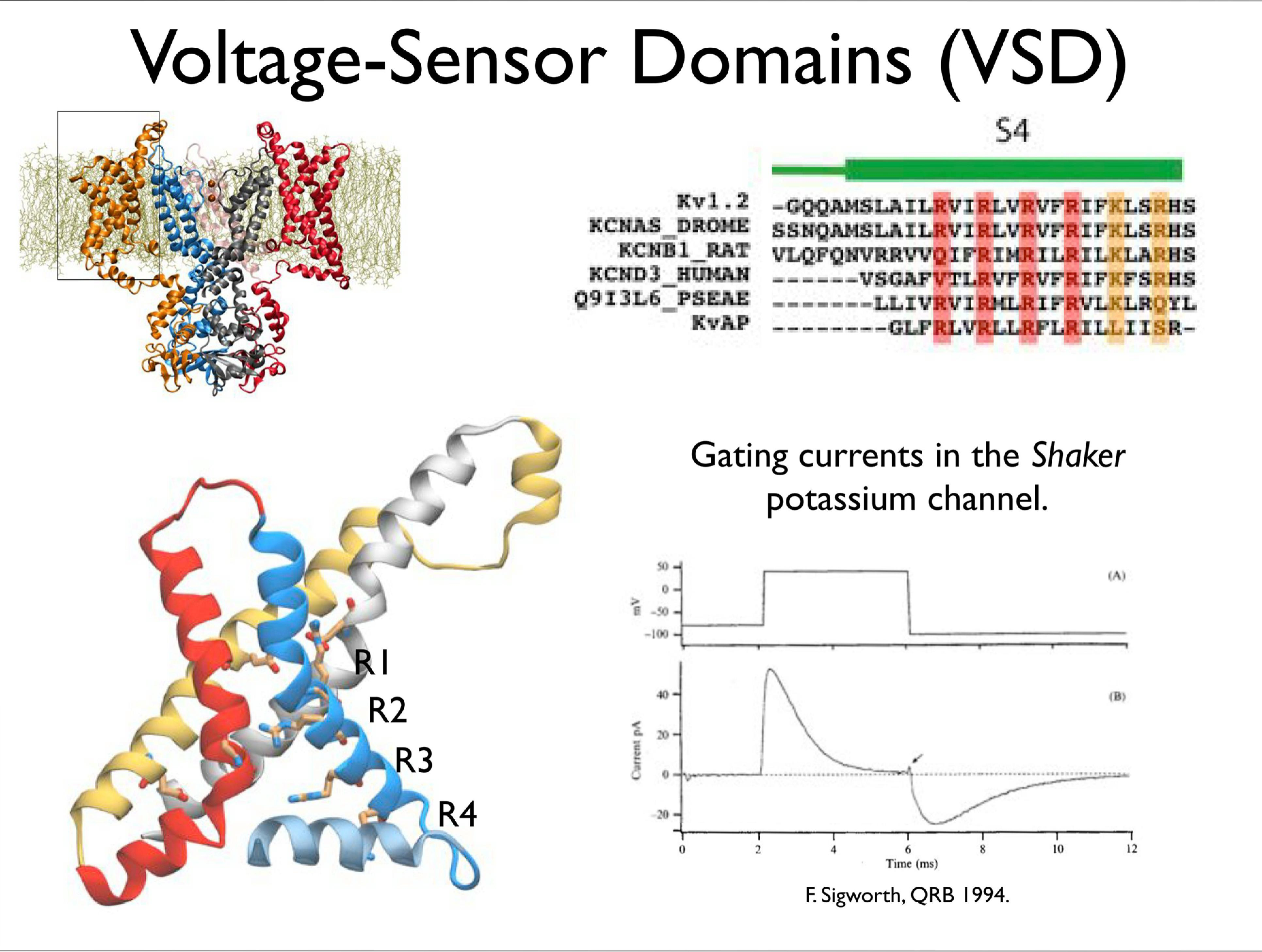 Slide 8: Voltage Sensor Domains (VSD)