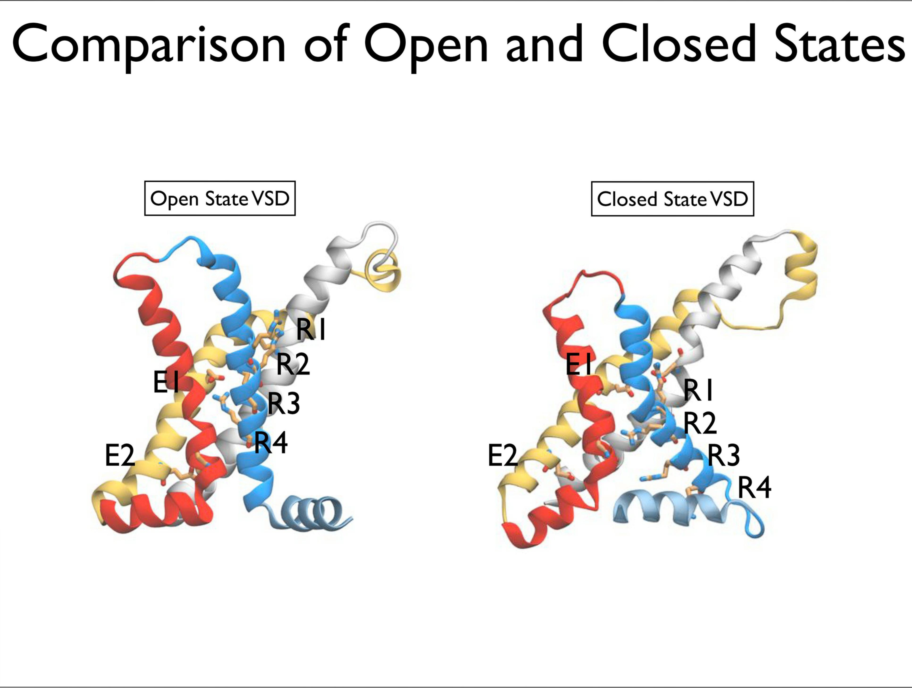 Slide 9: Comparison of Open and Closed States