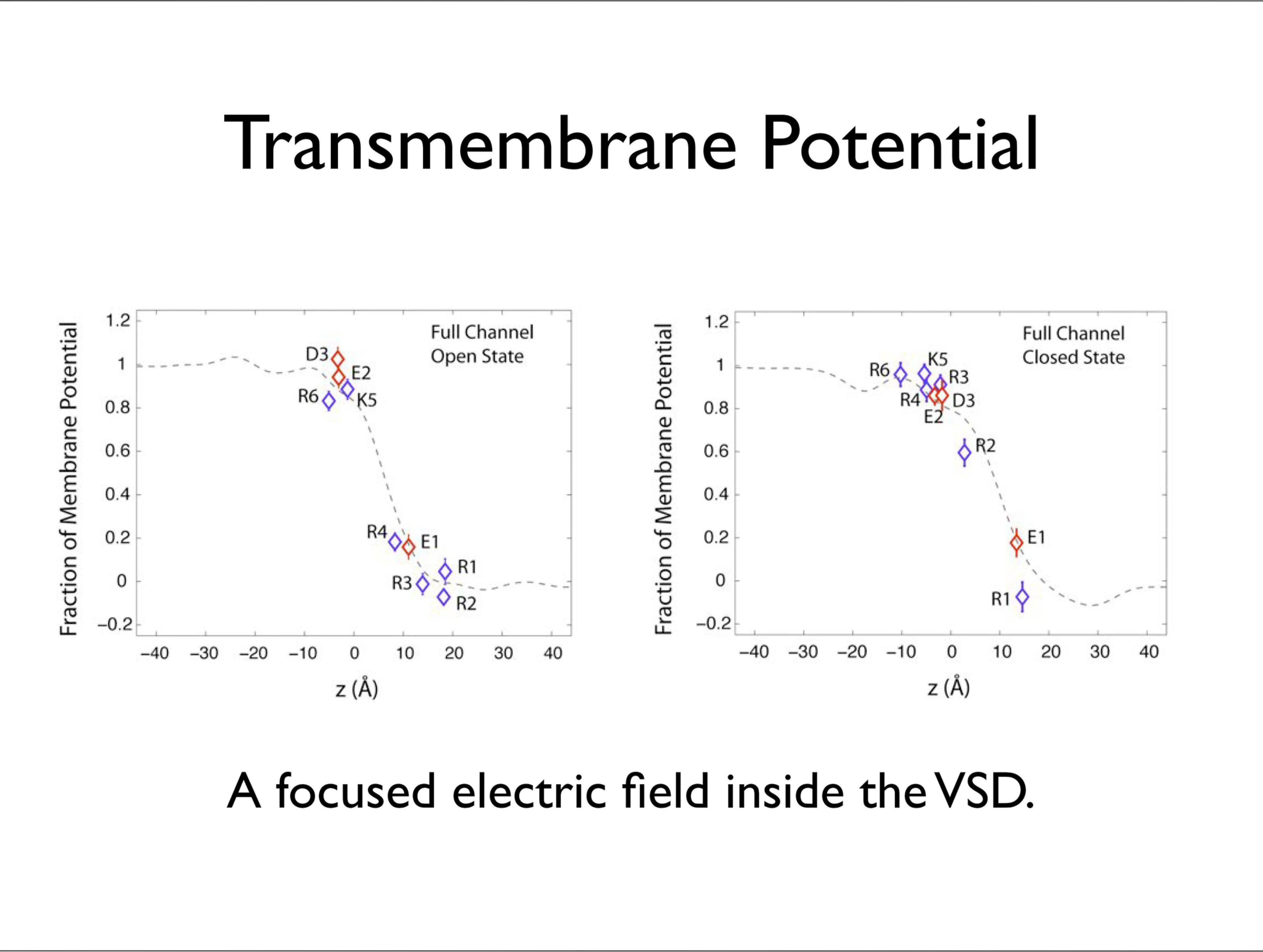 Slide 10: Transmembrane Potential