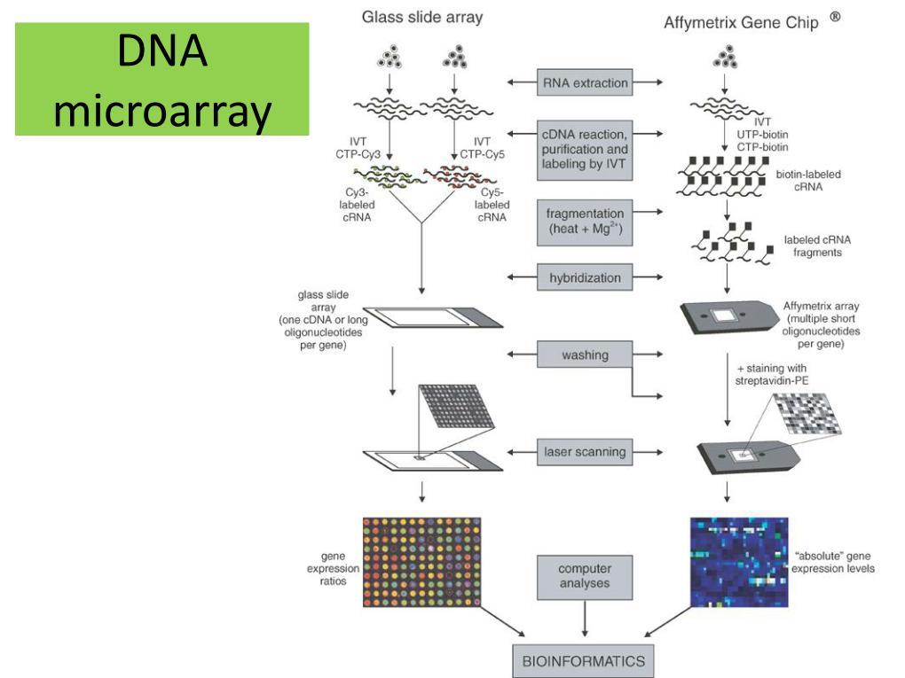 (PDF) Megabase-scale deletion using CRISPR/Cas9 to