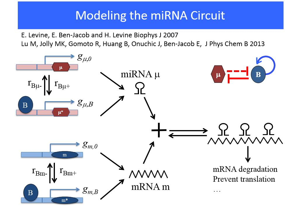 Modeling the miRNA Circuit