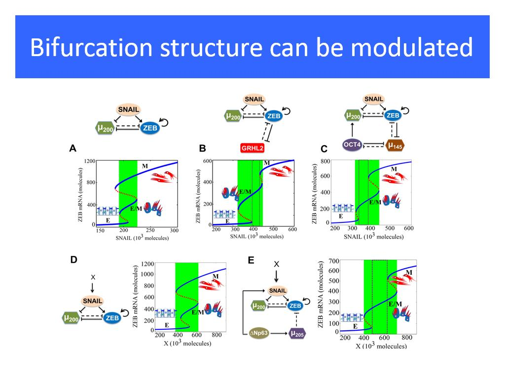 Bifurcation structure can be modulated