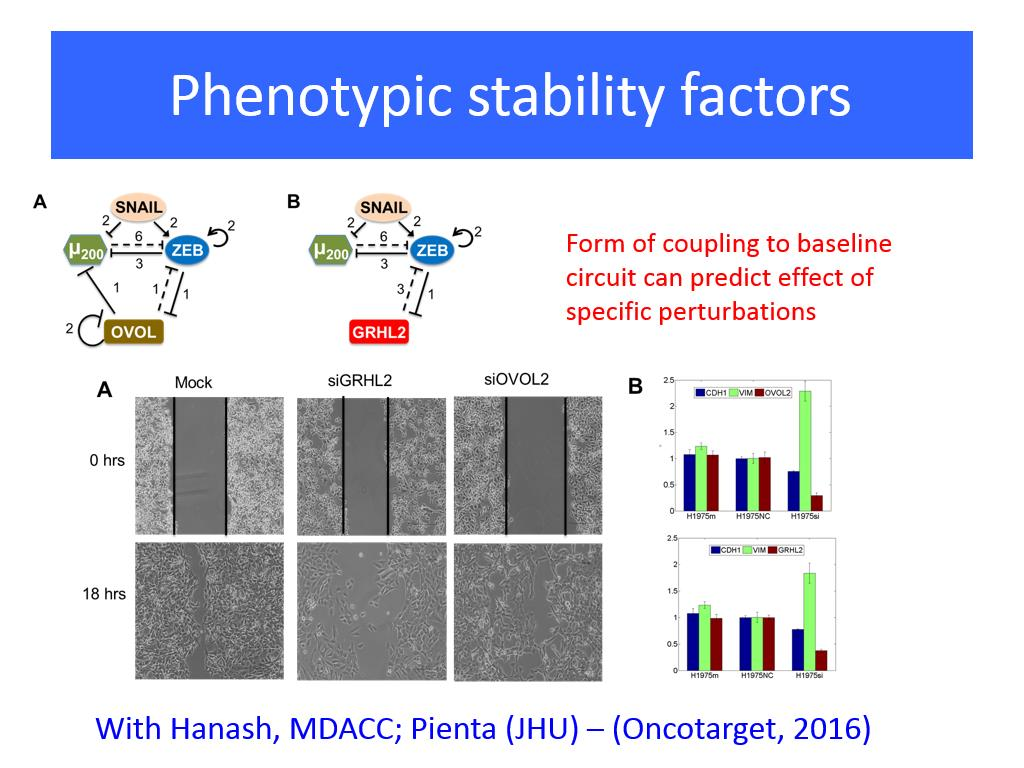Phenotypic stability factors