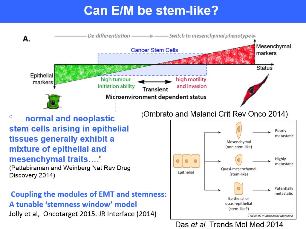 Can E/M be stem-like?