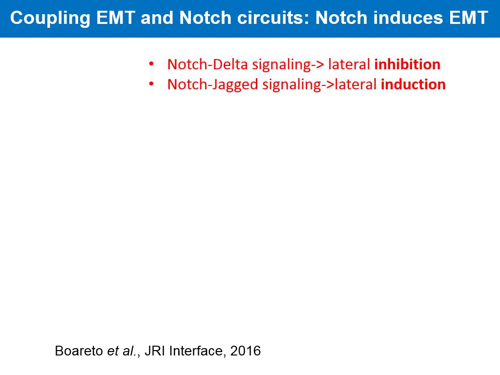 Coupling EMT and Notch circuits: Notch induces EMT