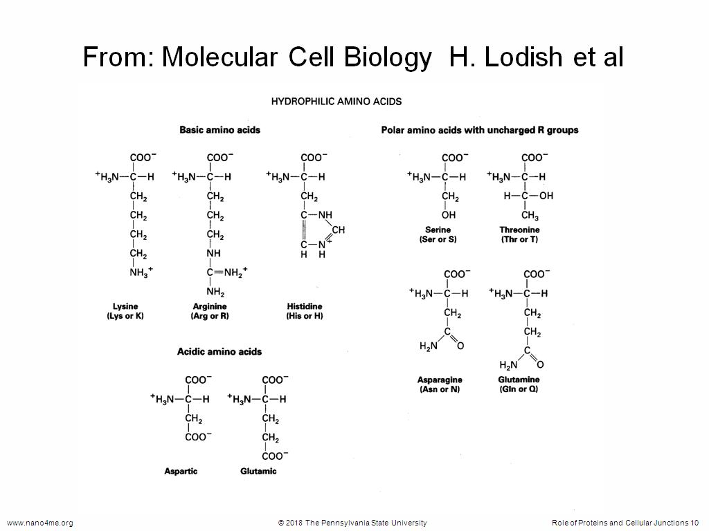 From: Molecular Cell Biology H. Lodish et al